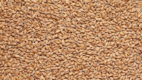Солод Пшеничный Курский (Wheat Malt Kursk) - EBC 7.7