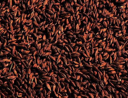 Солод Шато Роустед Барли, Chateau Roasted Barley, ЕВС 1100