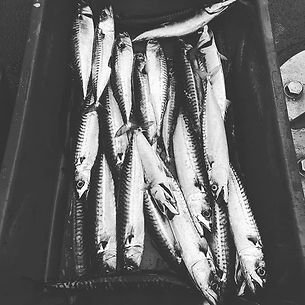 #FISH yum #catchandsea #fishing #fresh #