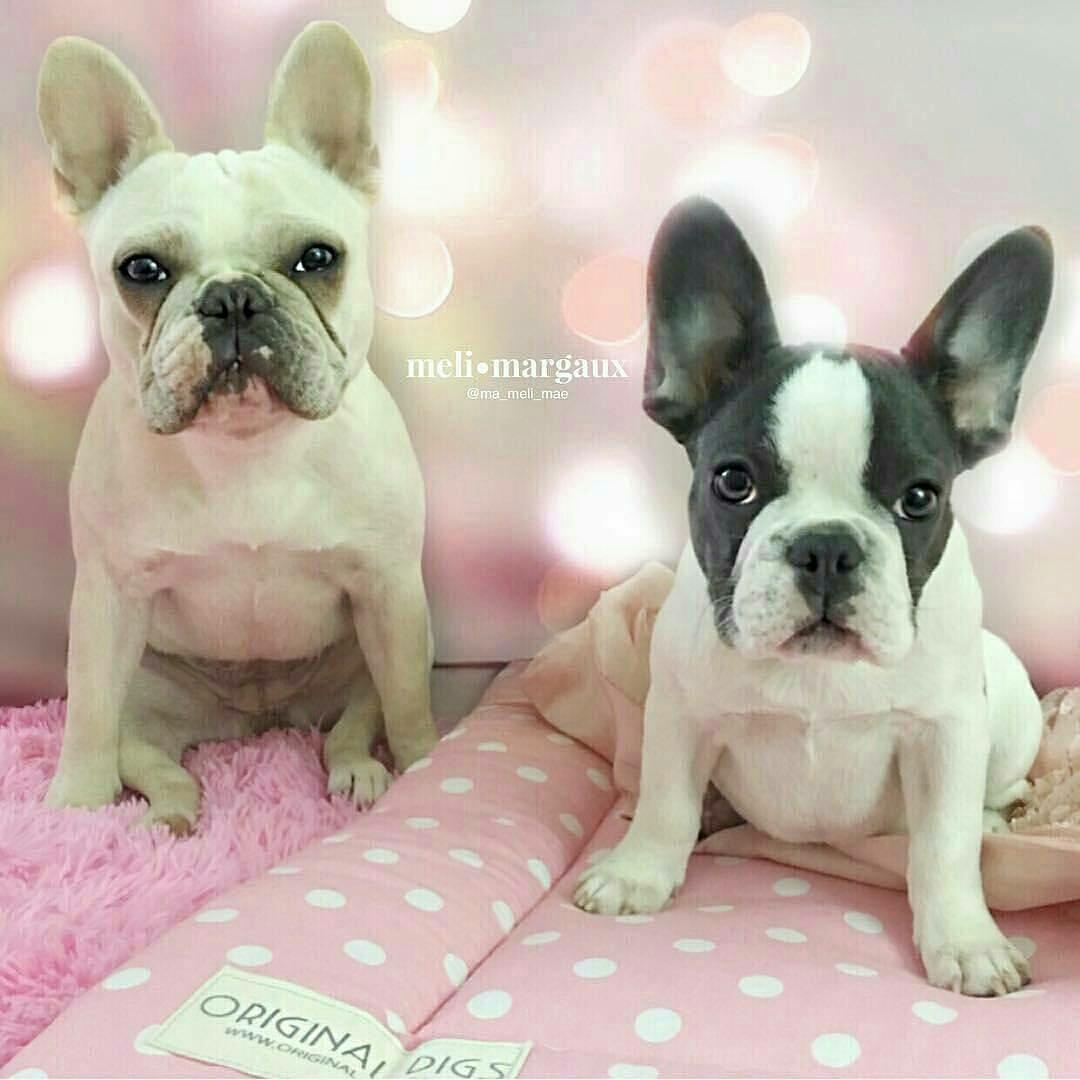 Pink Pet Beds