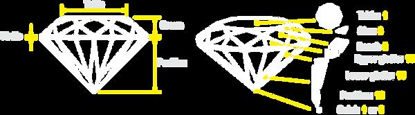 diamond anatomy all.png