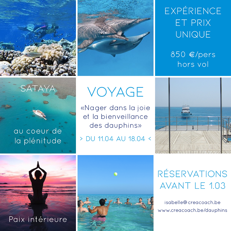 Visu voyage dauphins.png