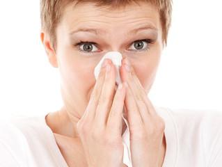 Notre billet radio du 27 avril: l'huile essentielle de Ravintsara pour le rhume et la grippe
