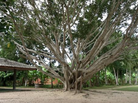 Forest Meditation in Suan Mokkh