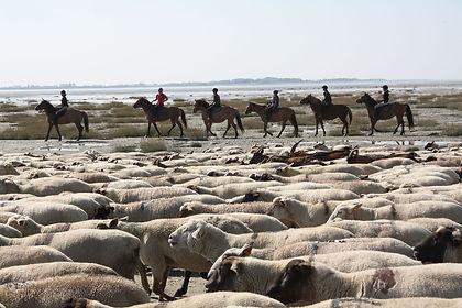 chevaux2_w.jpg