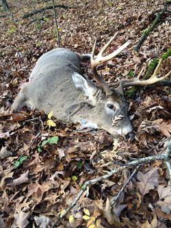 Buck killed by Curt Hoffart