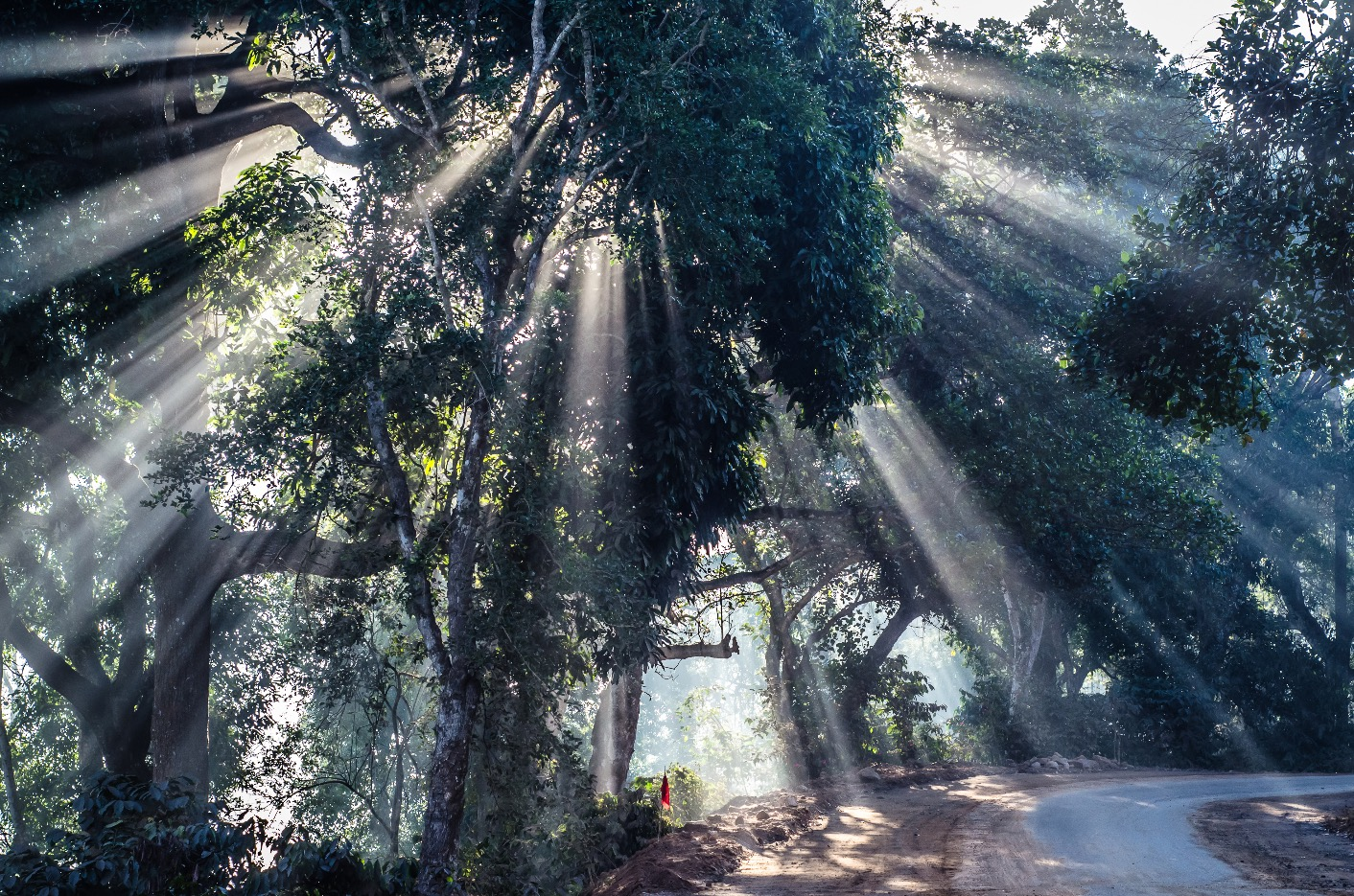 Sun rays through a tree in Lambasinigi, Andhra Pradesh