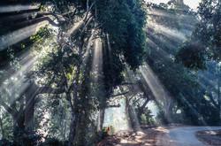 Sun rays through a tree in Lambasinigi, Andhra Pradesh