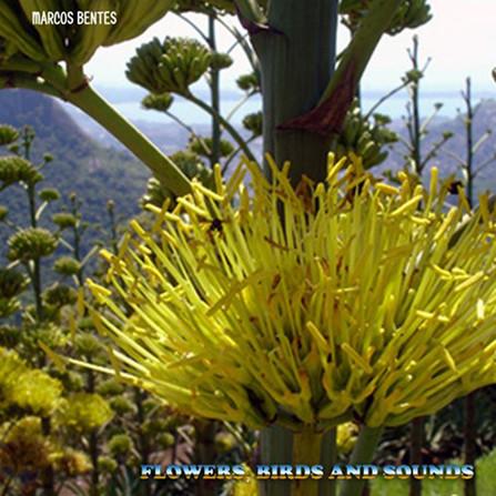 Flowers, Birds and Sounds (Marcos Bentes)