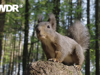 Eichhörnchen, Chipmunk, Ziesel & Co