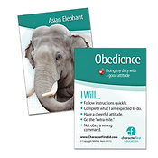 CF cards Obedience.png