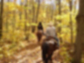 horse-82947.jpg