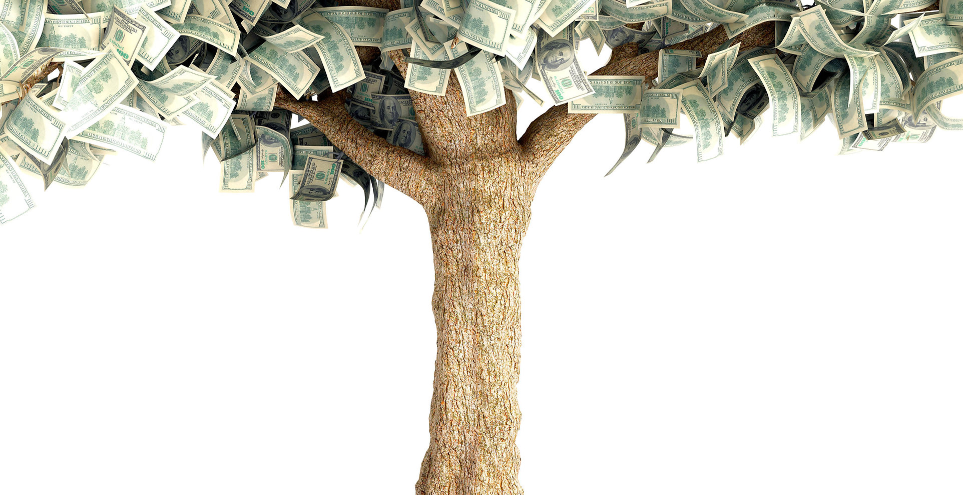 arvore_dinheiro.jpg