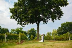 Monterre Vineyard Wedding