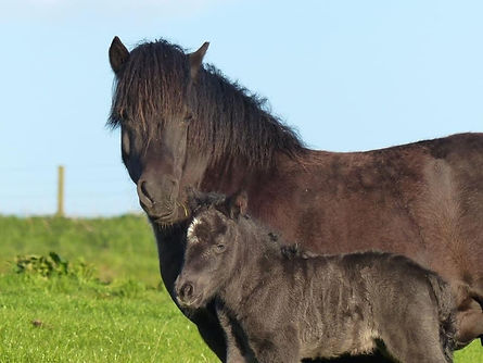 Wells Passion and foal.jpg
