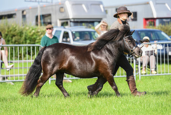 Jules 4th out of 14 at Cheshire County Show