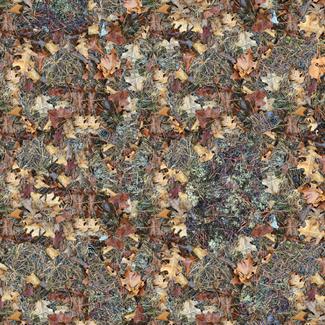 Forest Floor - Original