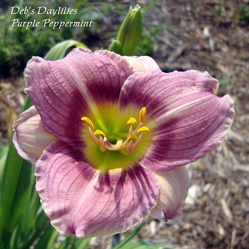 Purple Peppermint