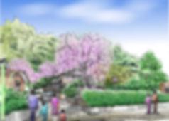 喜多家しだれ桜.jpg