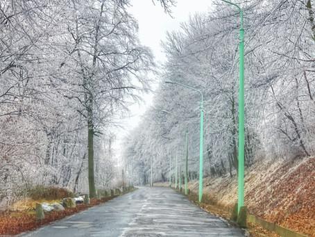 Waldführungen auch im Winter!