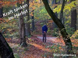 Herbst Spaziergang im Klosterwald Wien-Kahlenberg