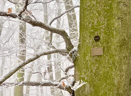 Winterspaziergang im Klosterwald