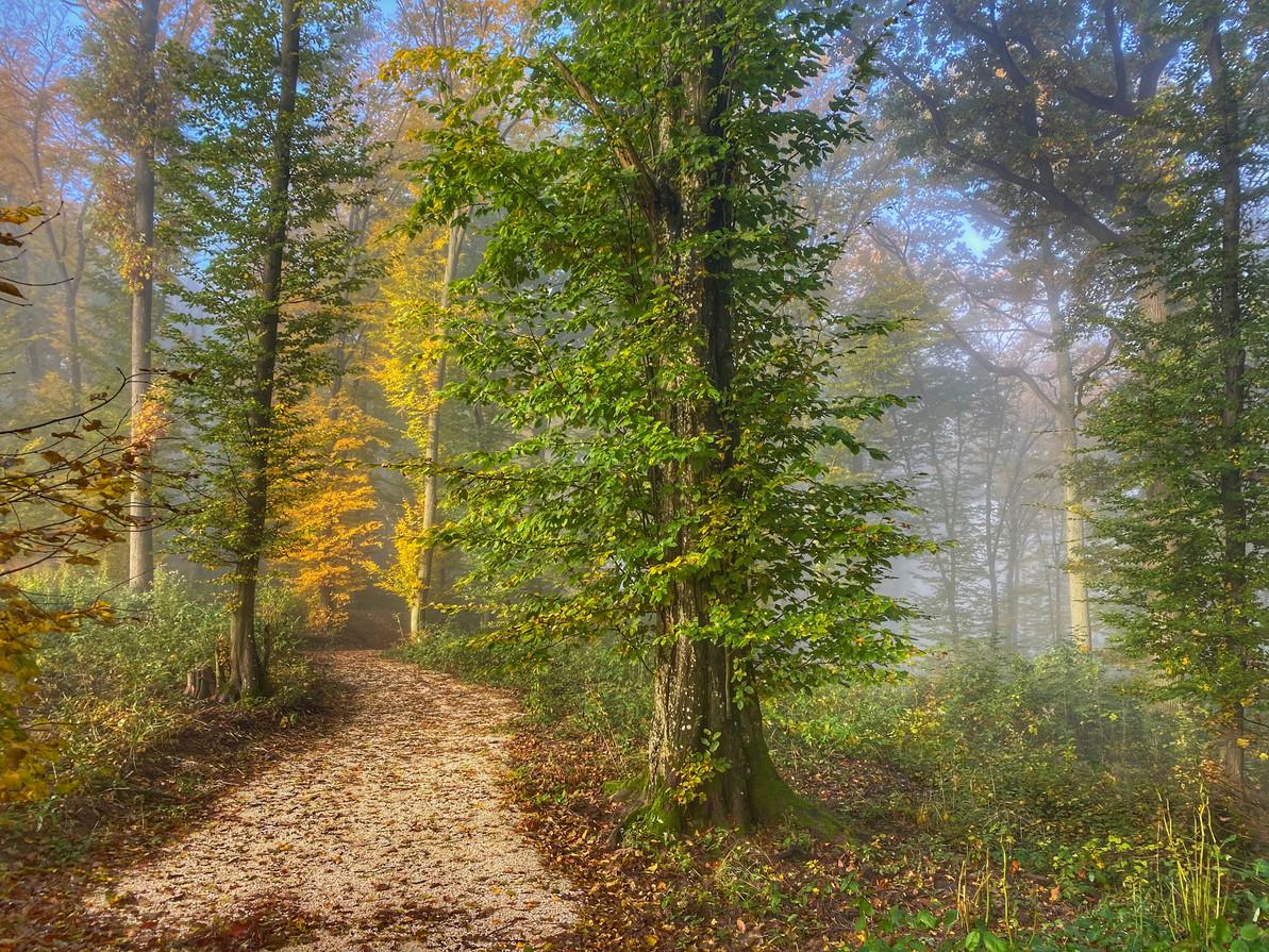 Klosterwald Rohrwald Herbst 2020