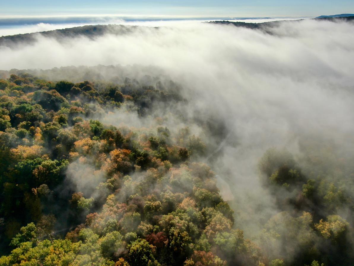Klosterwald im Herbst 2020