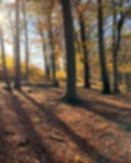 Klosterwald im Herbst