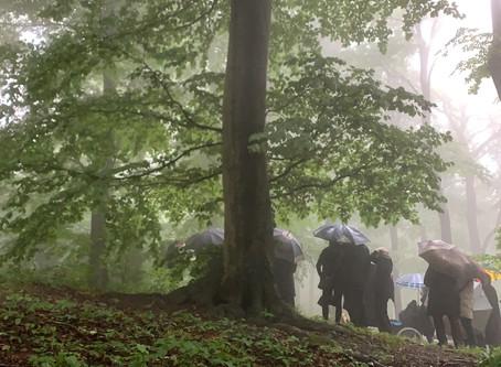 15. Mai 2020 - Endlich Regen im Klosterwald