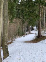 Klosterwald Kirchberg Waldwege