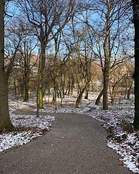 Klosterwald Waldweg Winter