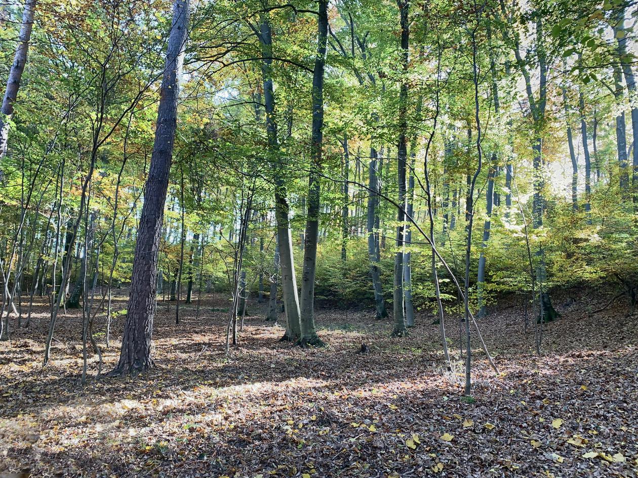 Baumbestattung im Klosterwald