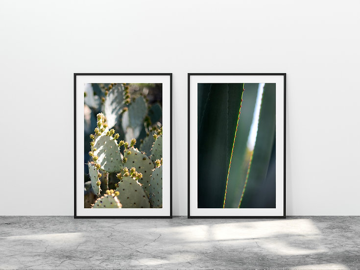 Print Nº 11 - Set of 2 Prickly Pear & Agave