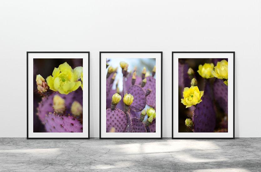 Print Nº 14 - Set of 3 Santa Ritas