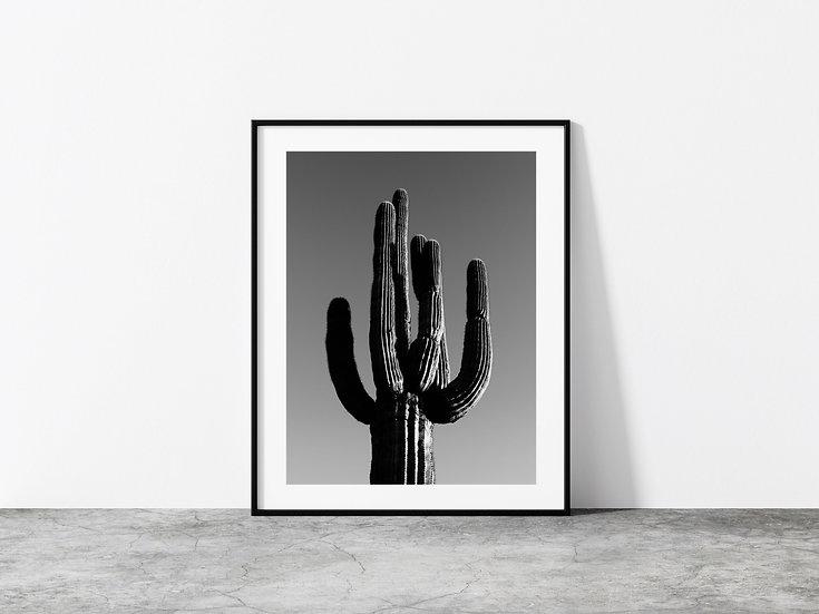 Print Nº 8 - Black & White Saguaro