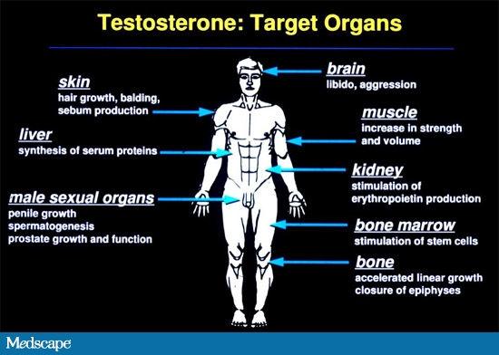 testosteronechart.jpg