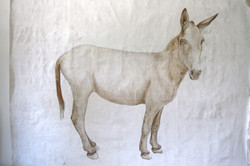 Esel, Nr. 15