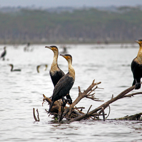 Lake Navasha, Kenya