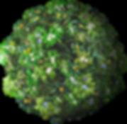 הקציצות של לידיה - Flower planet.png