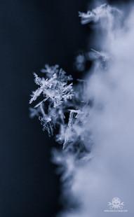 Winter am See 021