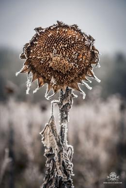 Winter - Eislandschaften 004
