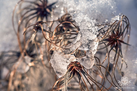 Winter - Eislandschaften 007
