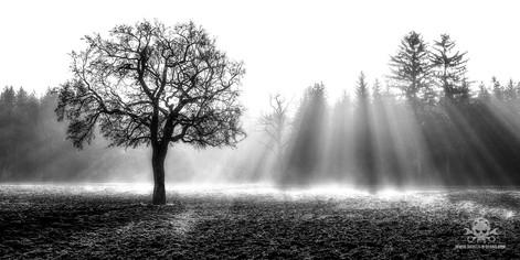 Winter - Frost-309.jpg