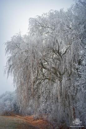 Winter - Eislandschaften 008