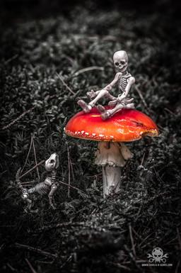 Skeleton Family
