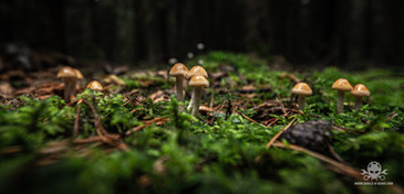 Pilze_Herbst-301.jpg