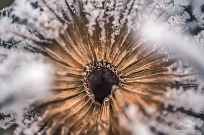 Winter am See 045
