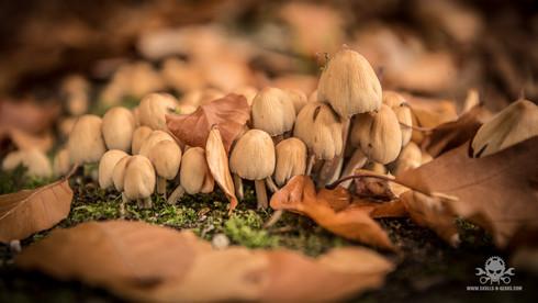 Pilze_Herbst-43.jpg