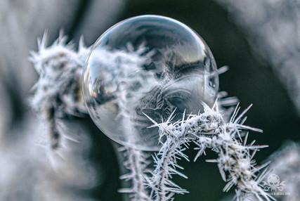 Winter - Frost-165.jpg